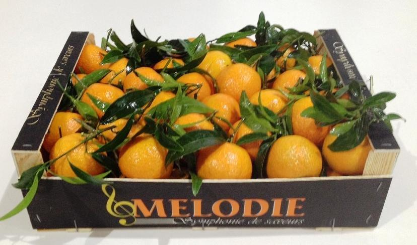 Melodie 40x30x11 (3)