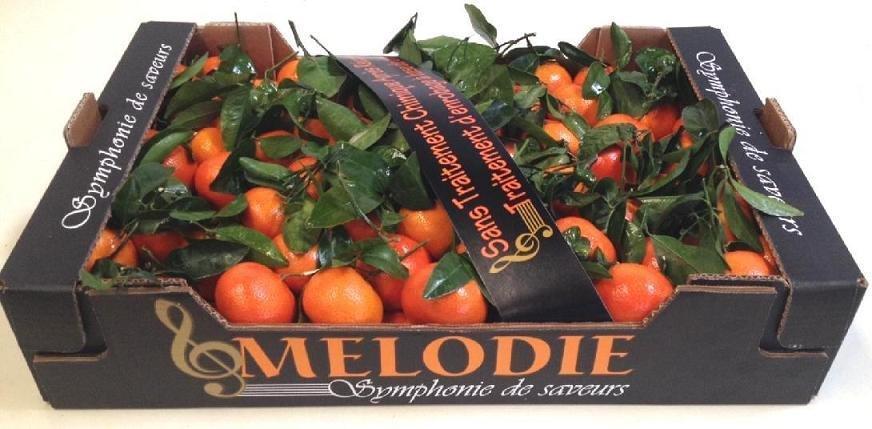 Melodie 60x40x11 NCott003